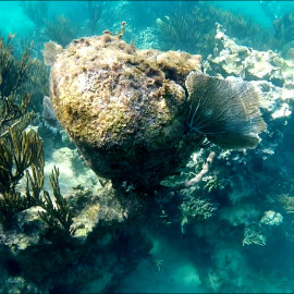 Мексика Акумаль Черепахи. Описание+подводная фото и видеосъемка.